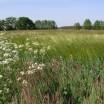 Frühling im Feld 1