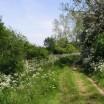 Frühling auf dem Deich bei Warthe 3