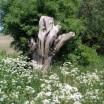 Frühling auf dem Deich bei Warthe 4