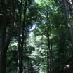 Uferwald am Wolgastsee 1
