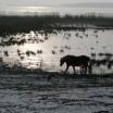 Winter an der Peene mit Pferd 2