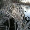 Gefrorenes Schilf am Ufer bei Warthe