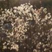 Licht im Strauch Usedom 1