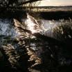 Schilf in der Novembersonne Usedom 2