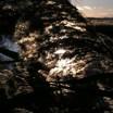 Schilf in der Novembersonne Usedom 1