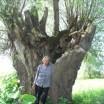 Natur-Kunstfrau und alte Kopfweide 1