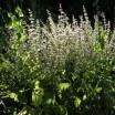 Duftgarten 2