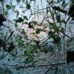 Eingefrorenes hellbläulich 1