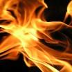 Feuerblume 1