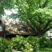 Katen mit Baumlandschaft 1