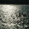 Ostsee mit alten Pfählen im Gegenlicht 1