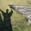 Schatten mit Metallecken in Katzow 2