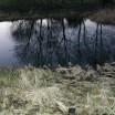Spiegelung Teich vor dem Haus 1
