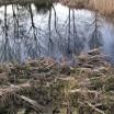 Spiegelung Teich vor dem Haus 2