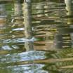 Uferspiegelung am Haff 4