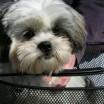 Kleiner Hund im Fahrradkorb 1