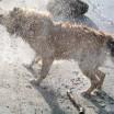Abkühlung in den Hundstagen 1